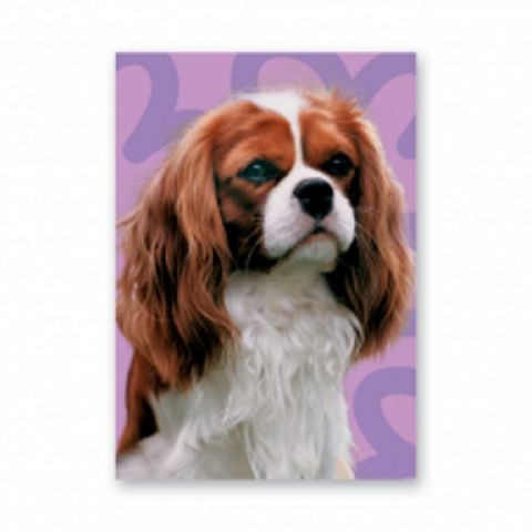 King Charles Cavalier Blenheim greetings card with purple background